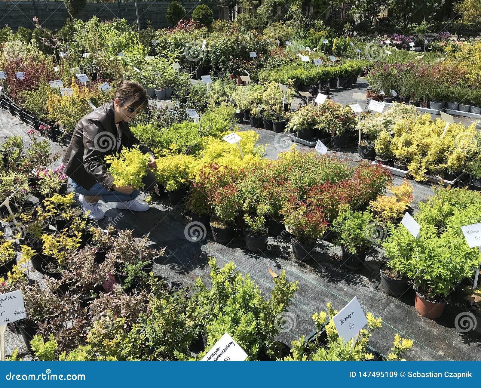 Kobieta zakupy dla nowych ro?liien i kwiat?w przy ogrodnictwem i ro?lina plenerowym sprzedawc?