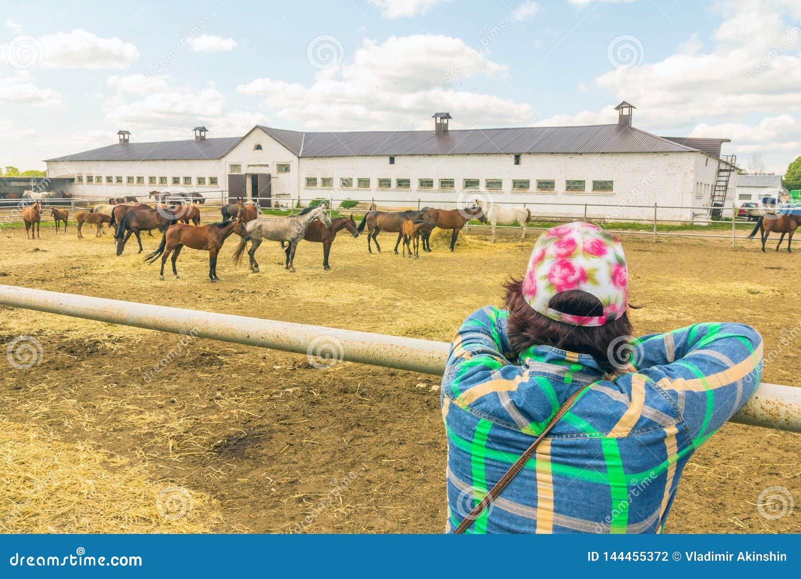 Kobiety dopatrywania konie na konia gospodarstwie rolnym