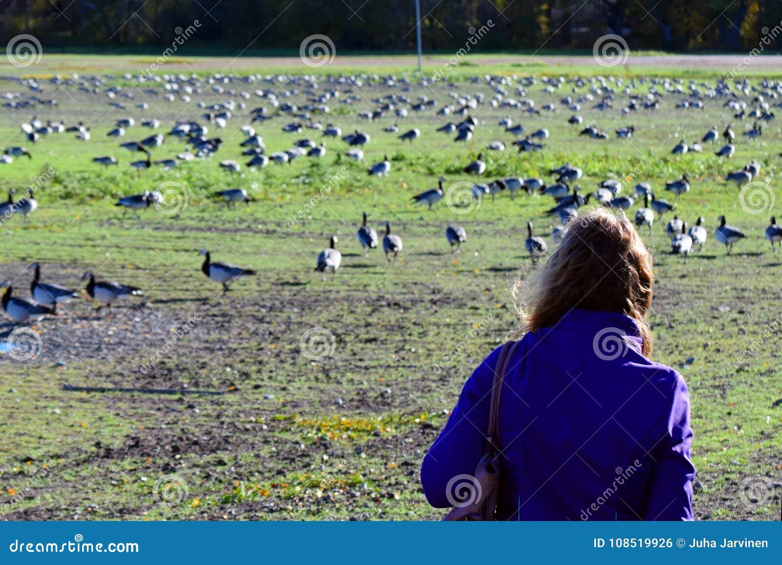 Kobiety dopatrywania ptaki