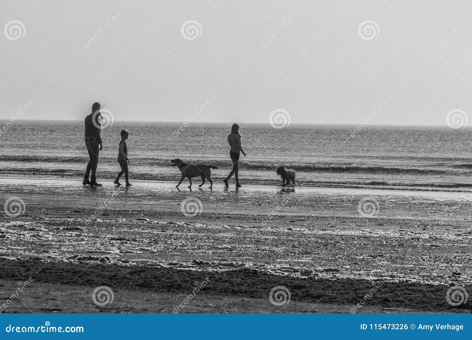 Kobiety dwa dzieci i dwa psa