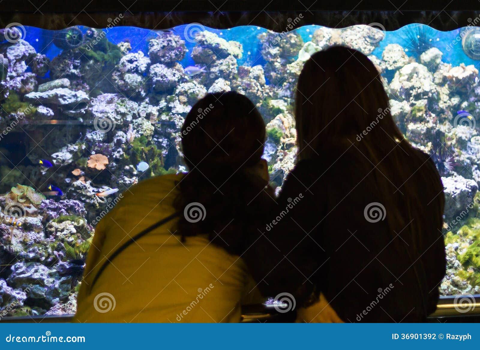 Kobiety patrzeje akwarium