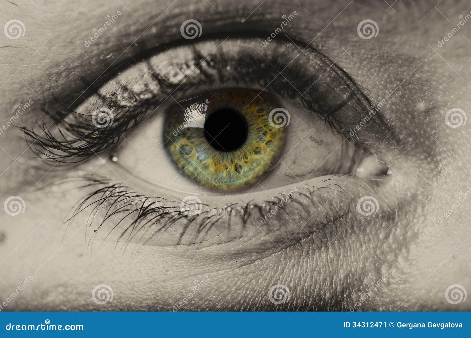 Kobiety zielonego oka odosobniony makro-