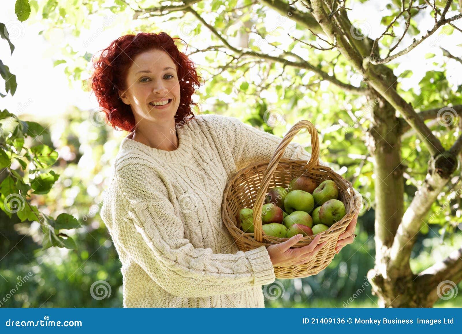Kobiety zrywania jabłka w ogródzie