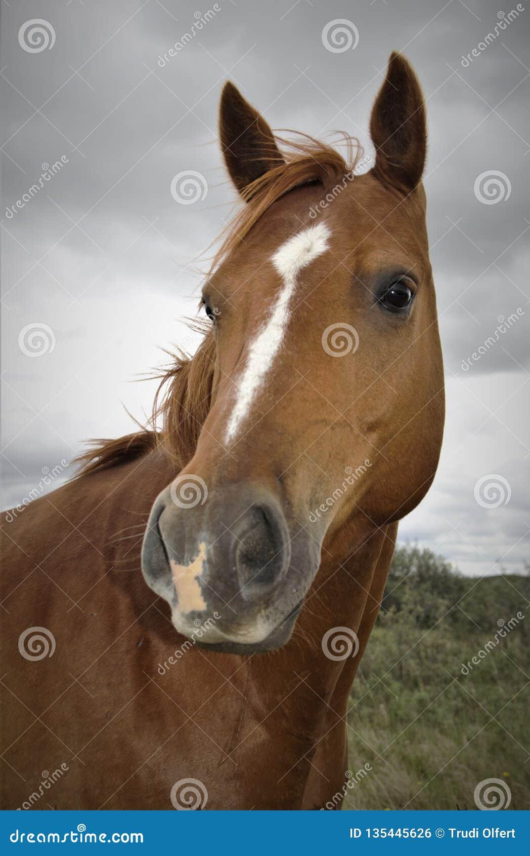 Kobylaka cisawy koń z wąskim blaskiem