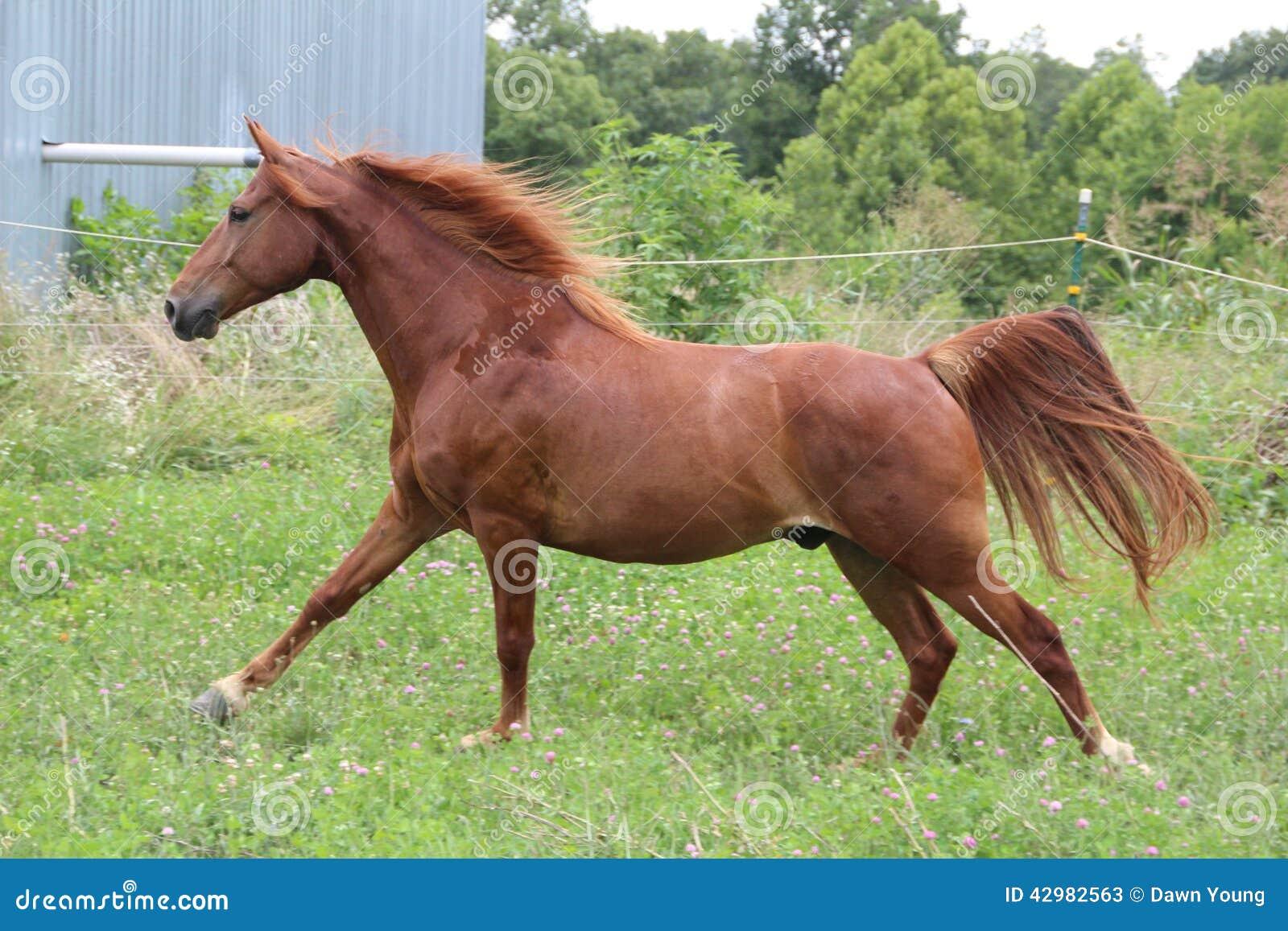 Kobylaka konia bieg