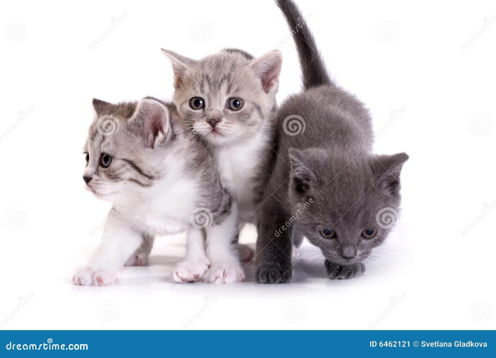 Koci sztuki się tło białe