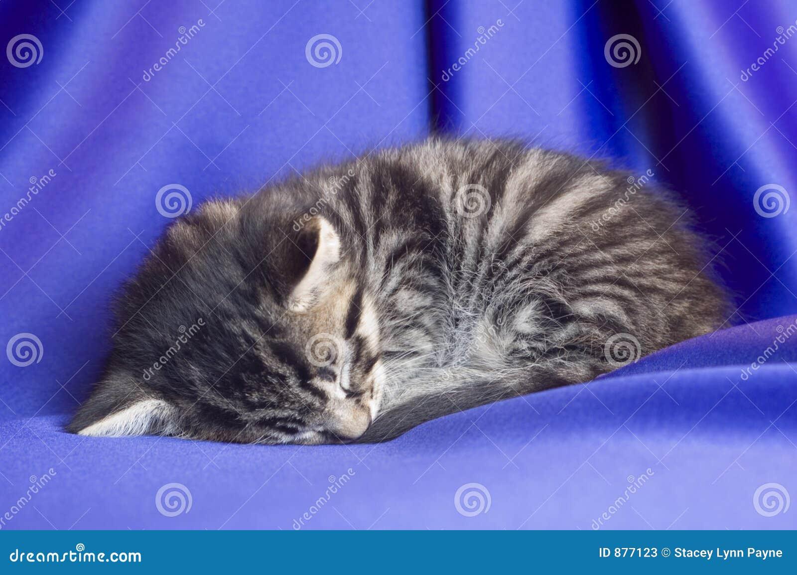Kociaki śpi