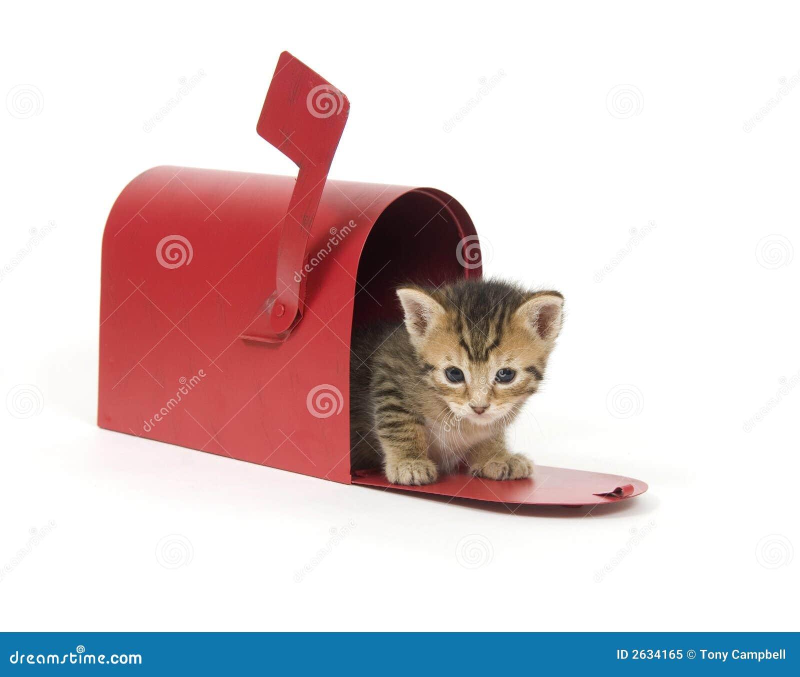 Kociaki skrzynki czerwony