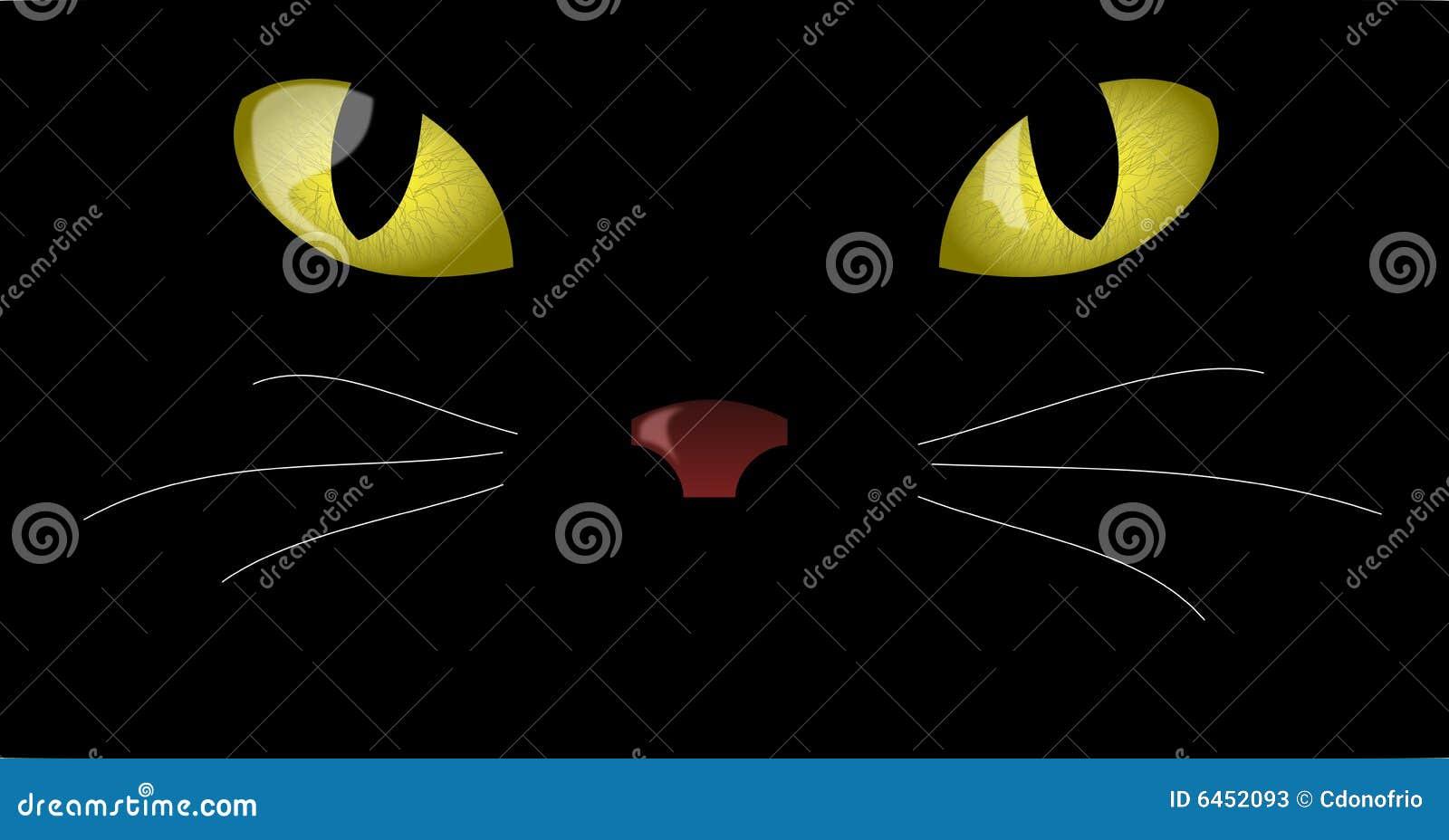 Kocich oczu