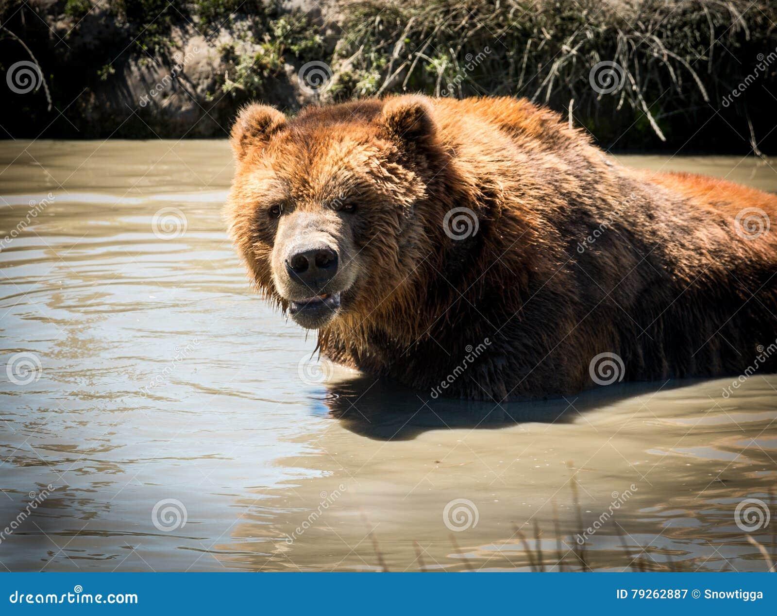 Kodiak na água