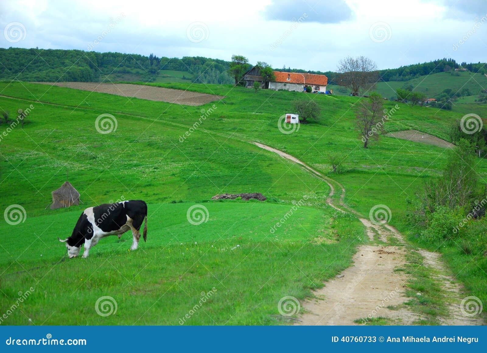 Koe en huis op mooie heuvels stock foto afbeelding 40760733 - Mooie huis foto ...