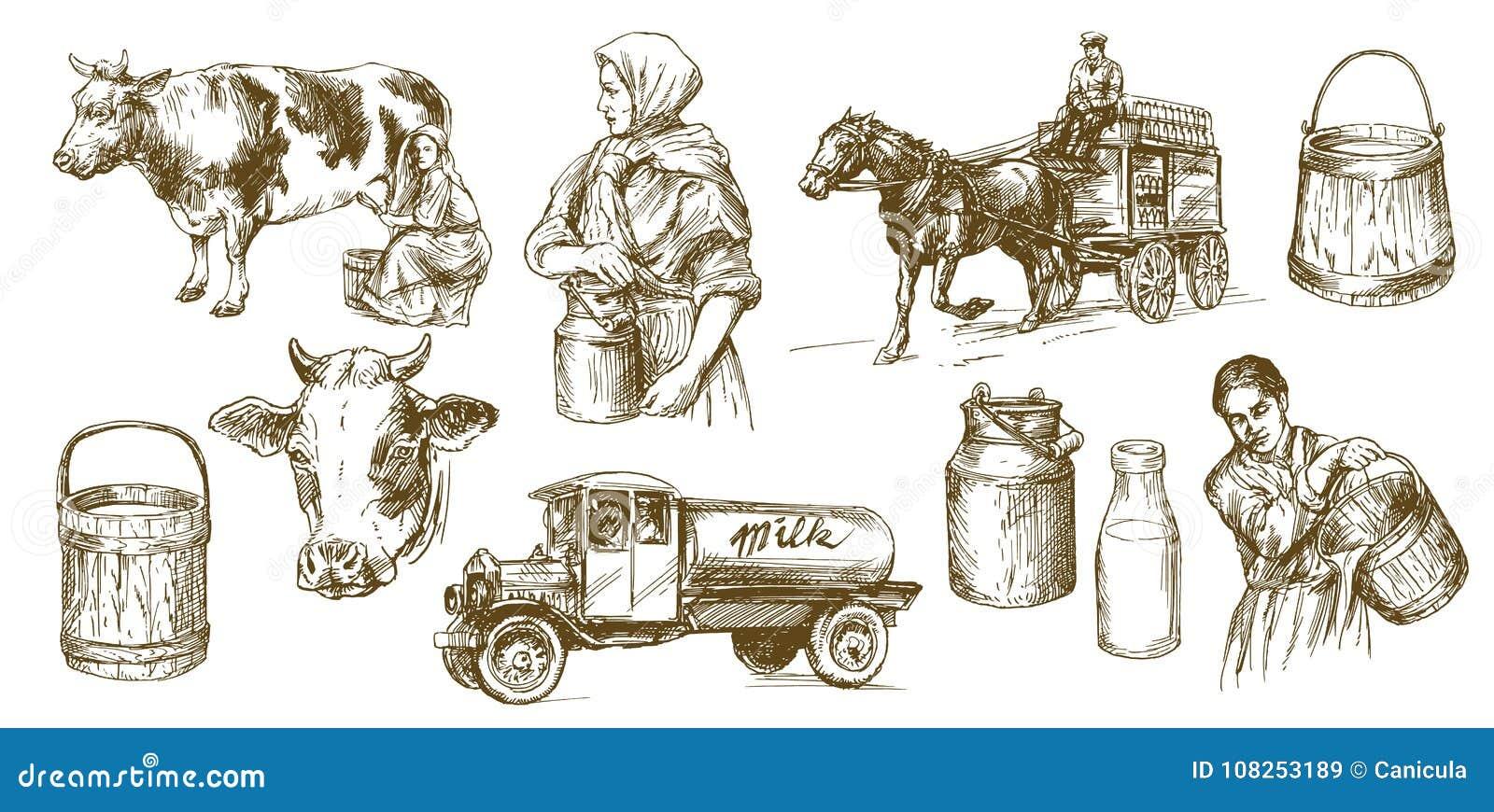Koe, melk, zuivelproduct