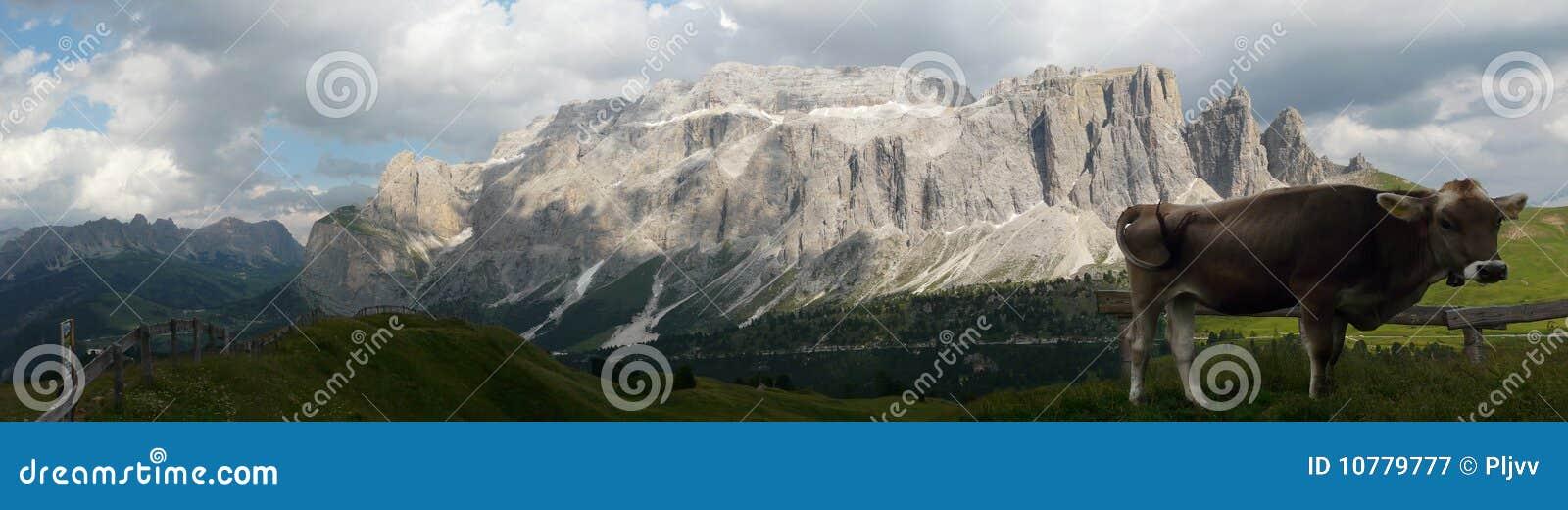 Koe voor Dolomiet