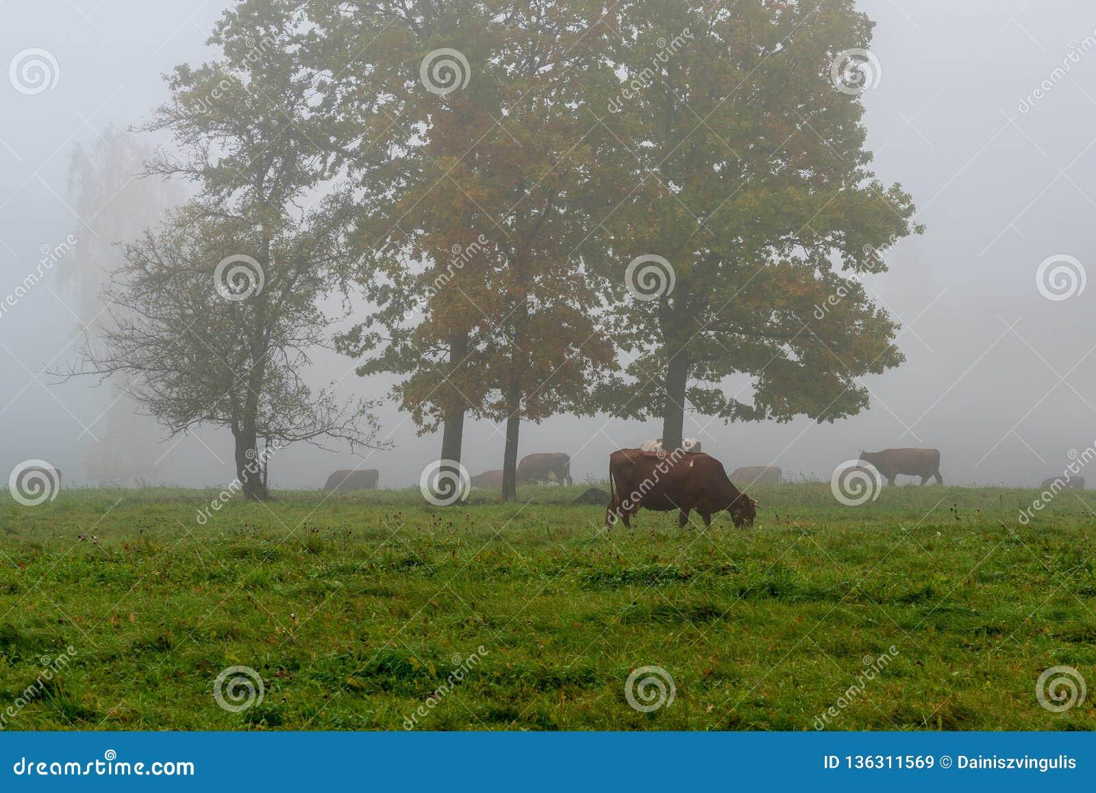 Koeien die op het groene gebied weiden