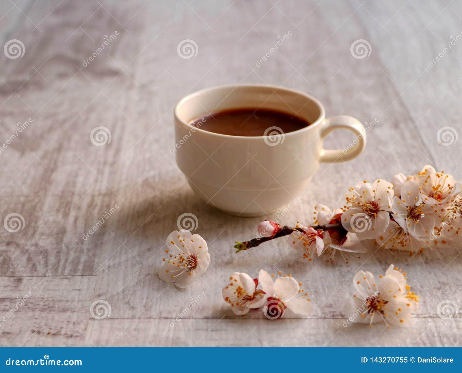 Koffie op een neutrale achtergrond met abrikozenbloemen in voorgrond