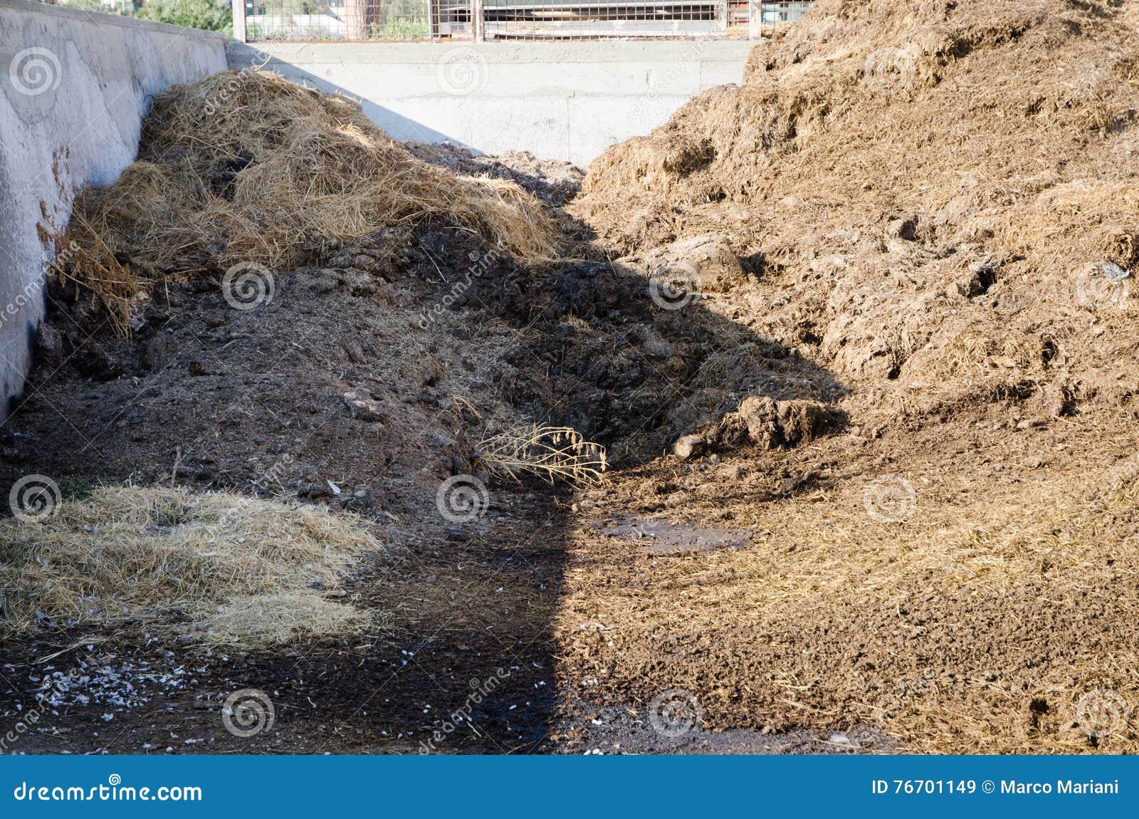 Kogödsel i en lantgård
