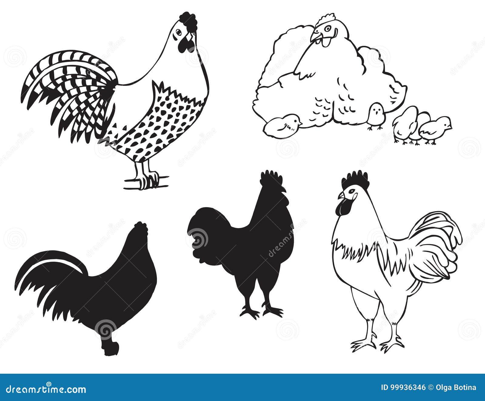 Koguty i karmazynka z kurczakami