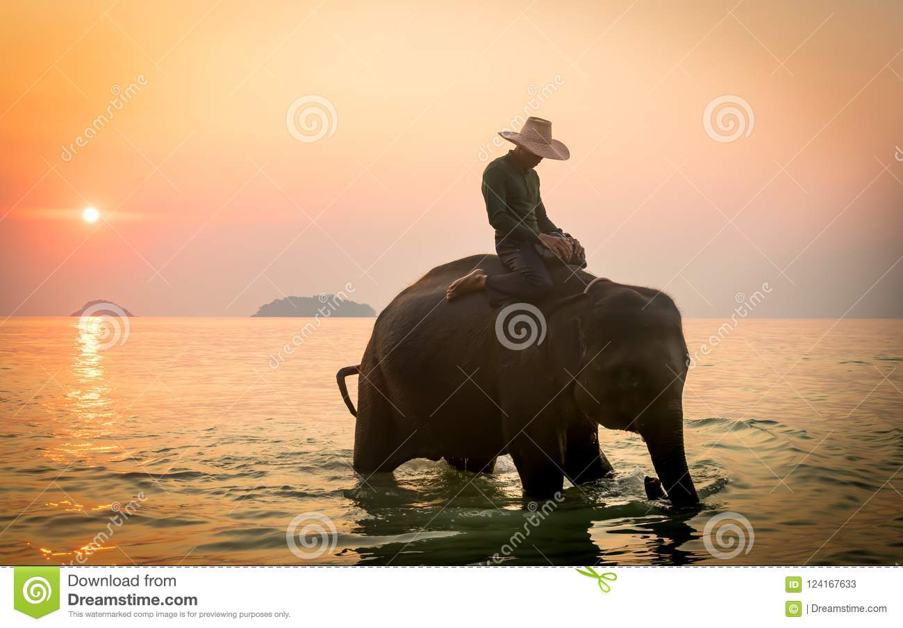Koh Chang, Thailand 02-Feb-2018 Man att rida en elefant i havet under solnedgång