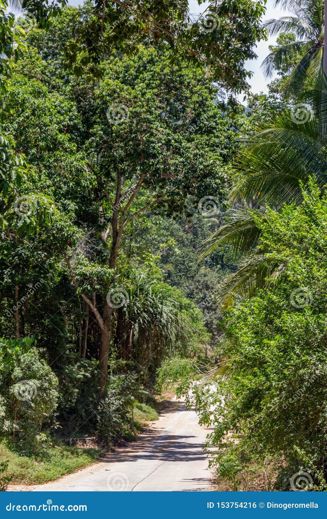Koh Samui djungel Thailand