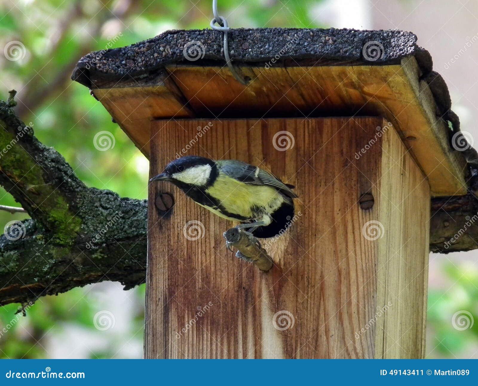 kohlmeise die auf dem vogelhaus sitzt stockfoto bild. Black Bedroom Furniture Sets. Home Design Ideas