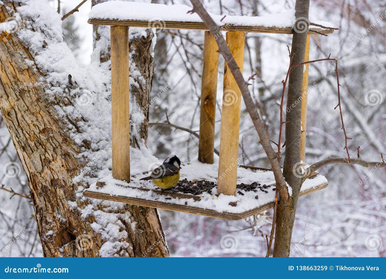 Kohlmeise Parusmajor im schneebedeckten Wald