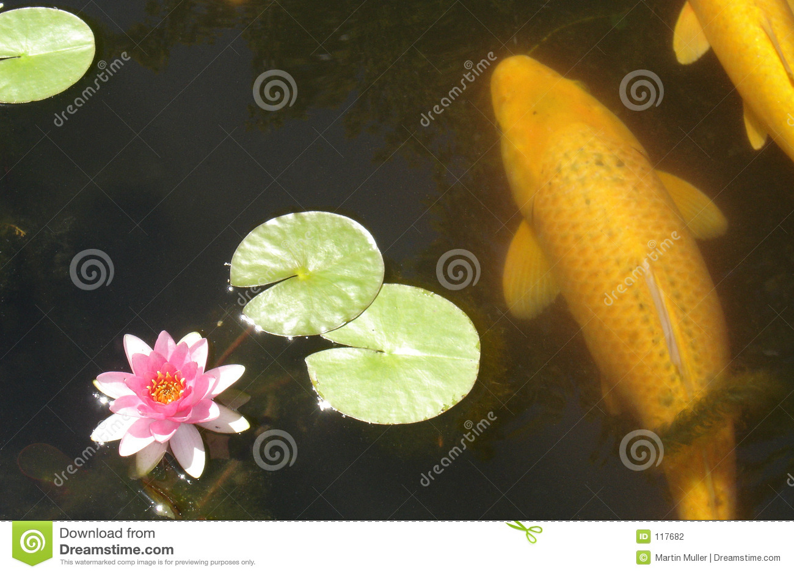 Koi 02 ψαριών
