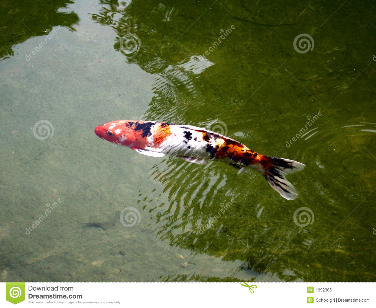 Koi royalty free stock photo image 1992385 for Pool koi aquatics ltd