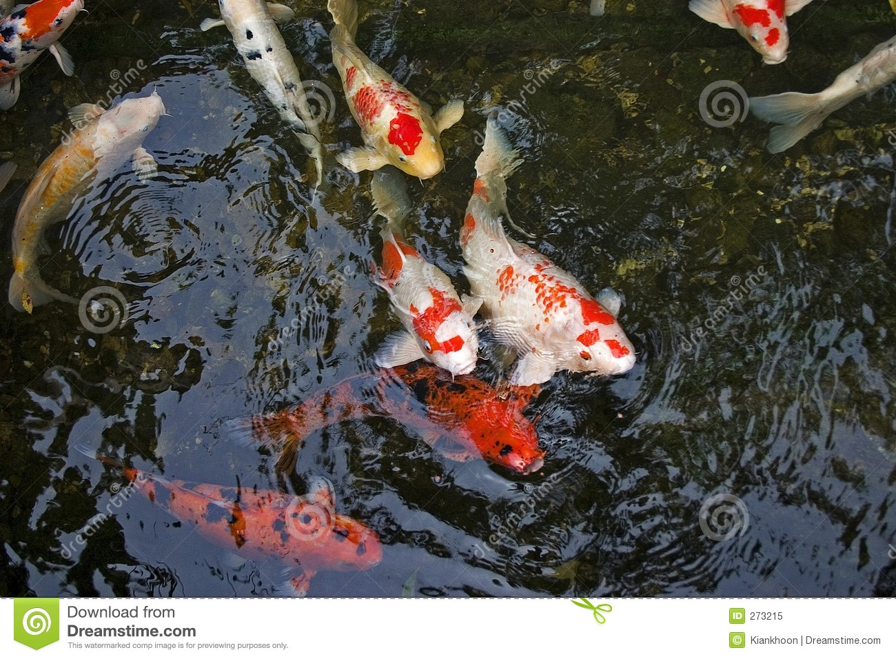 Koi carp royalty free stock photo image 273215 for Pool koi manchester