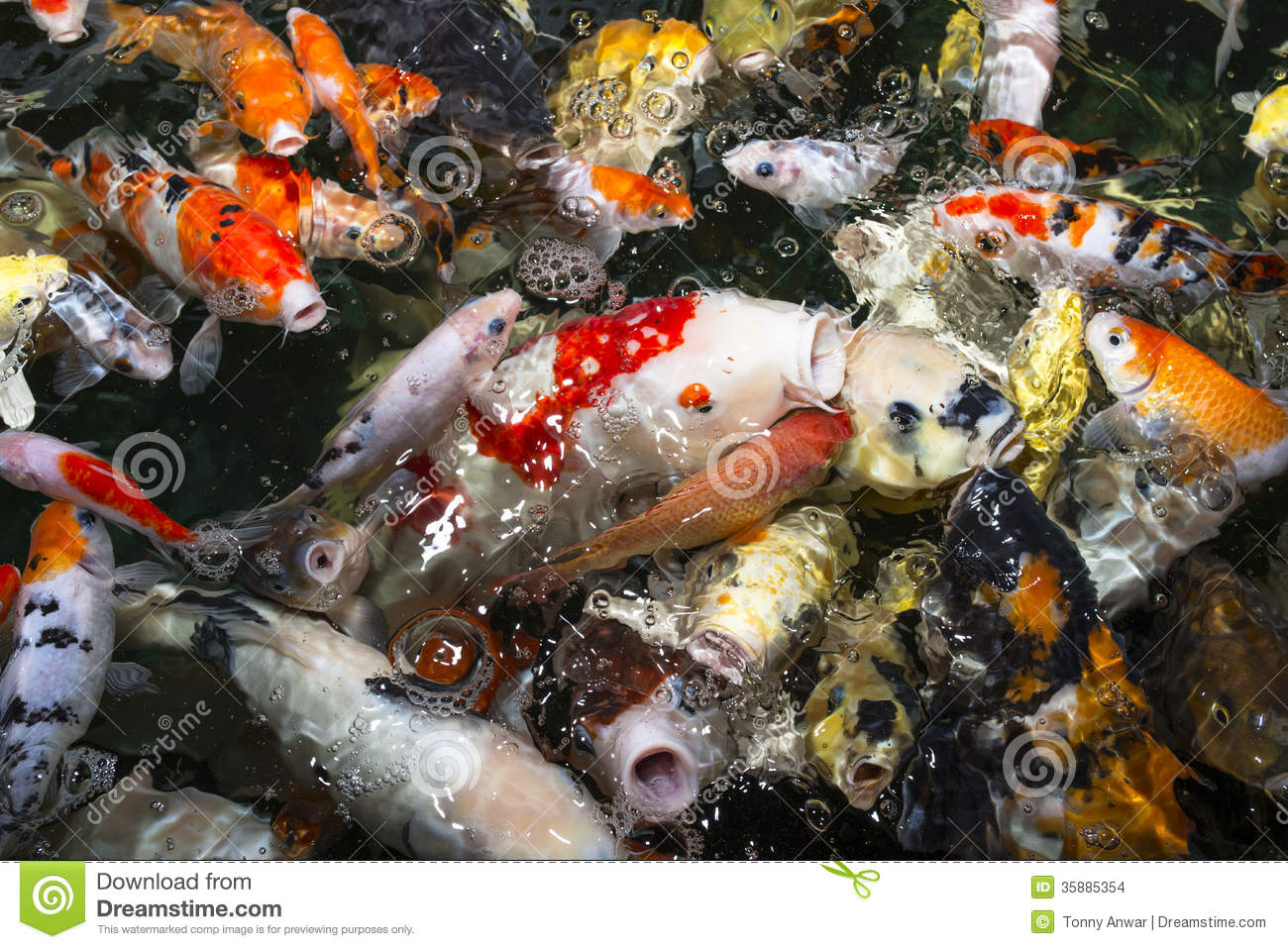 Koi carp stock images image 35885354 for Decorative pond fish