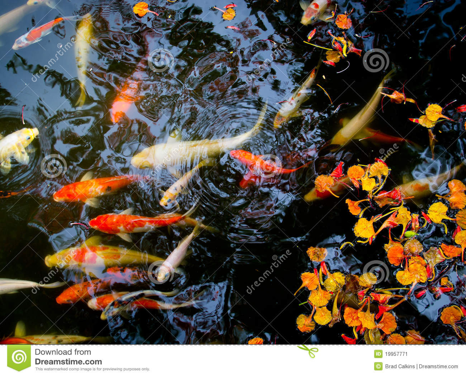 Orange fish with flowers cartoon vector cartoondealer for Koi fish dealers