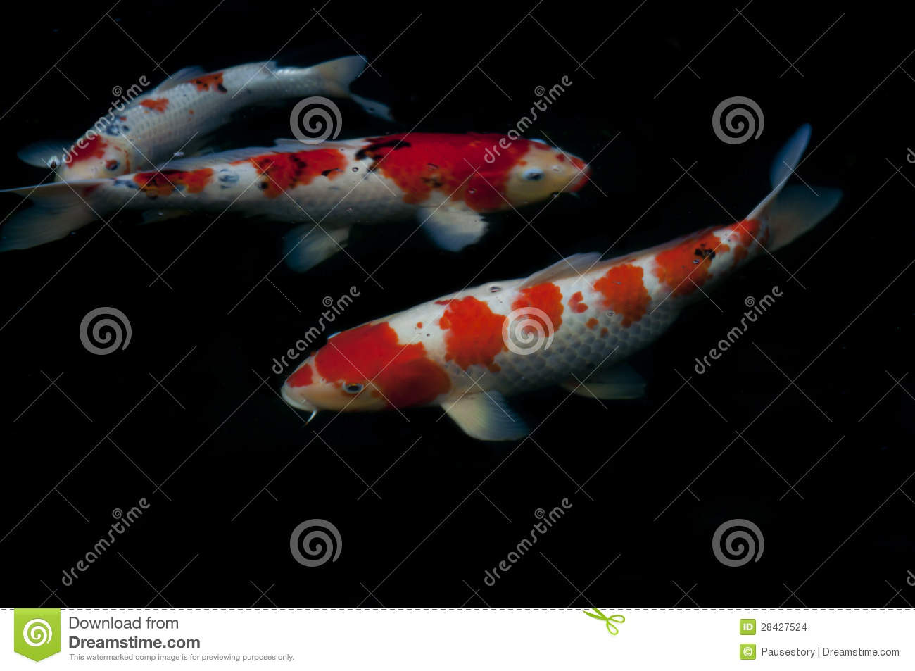 Koi fish stock images image 28427524 for All black koi fish