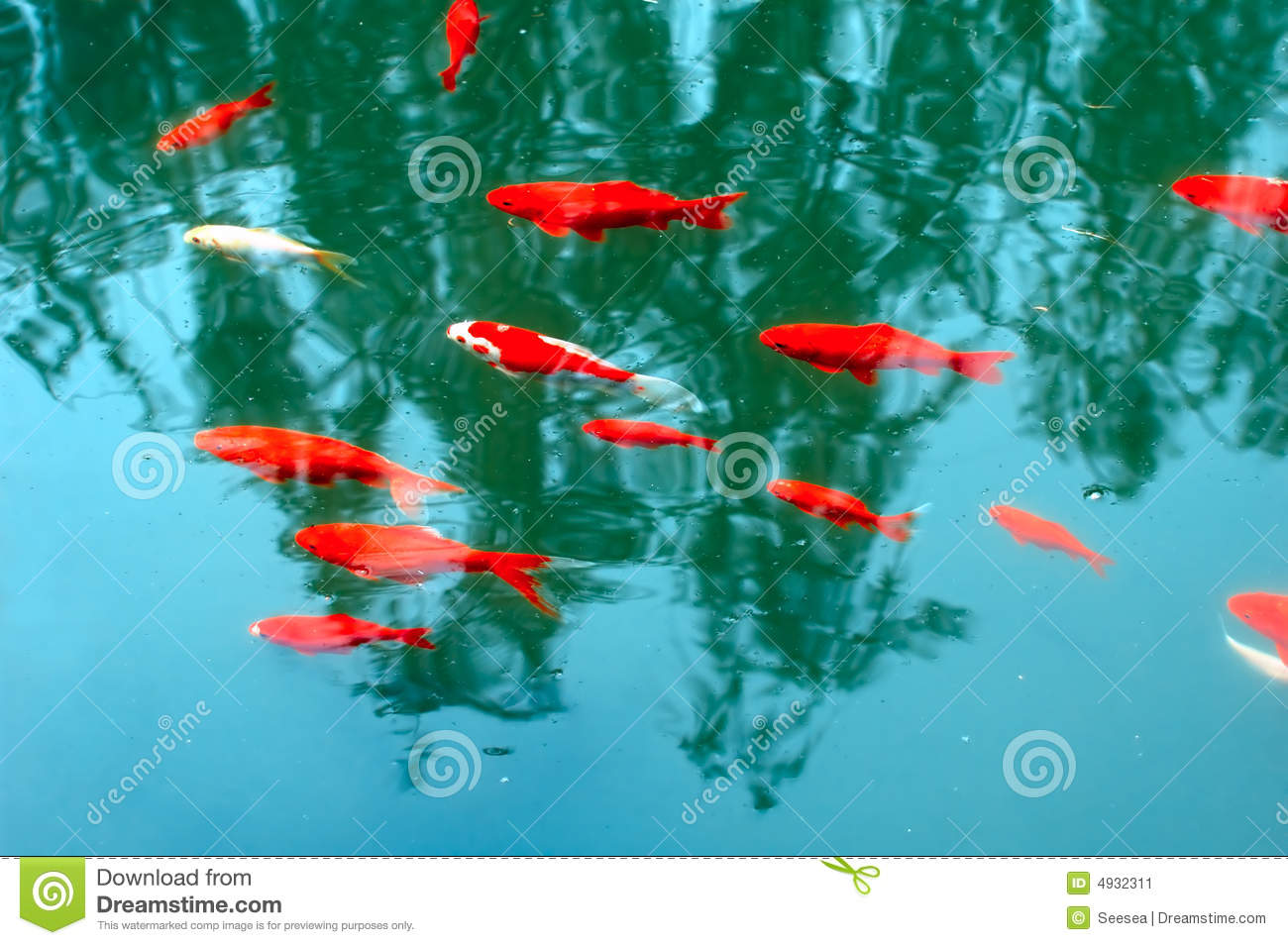 Koi fish stock image image 4932311 for Fish dream meaning pregnancy
