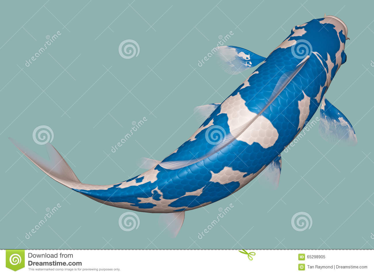 koi fish bleu clair illustration stock image 65298905