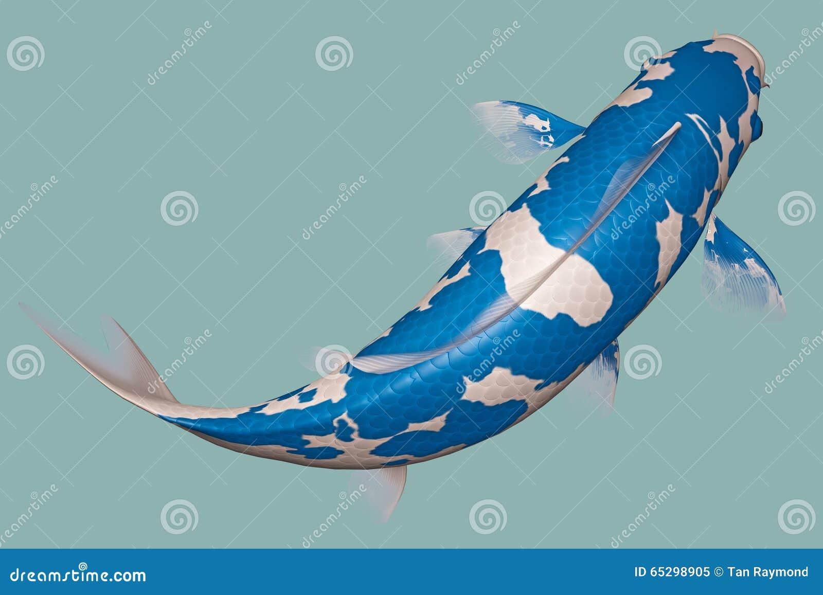 Koi fish bleu clair illustration stock image 65298905 for Achat carpe koi occasion