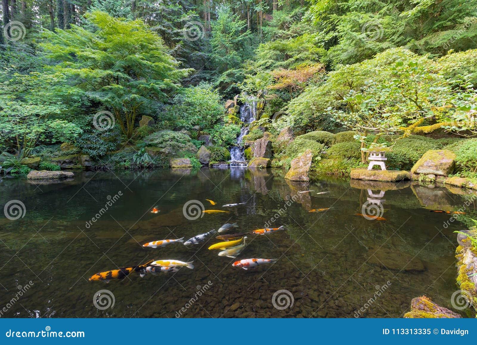 Koi Fish Dans L\'étang De Cascade Au Jardin Japonais Image ...