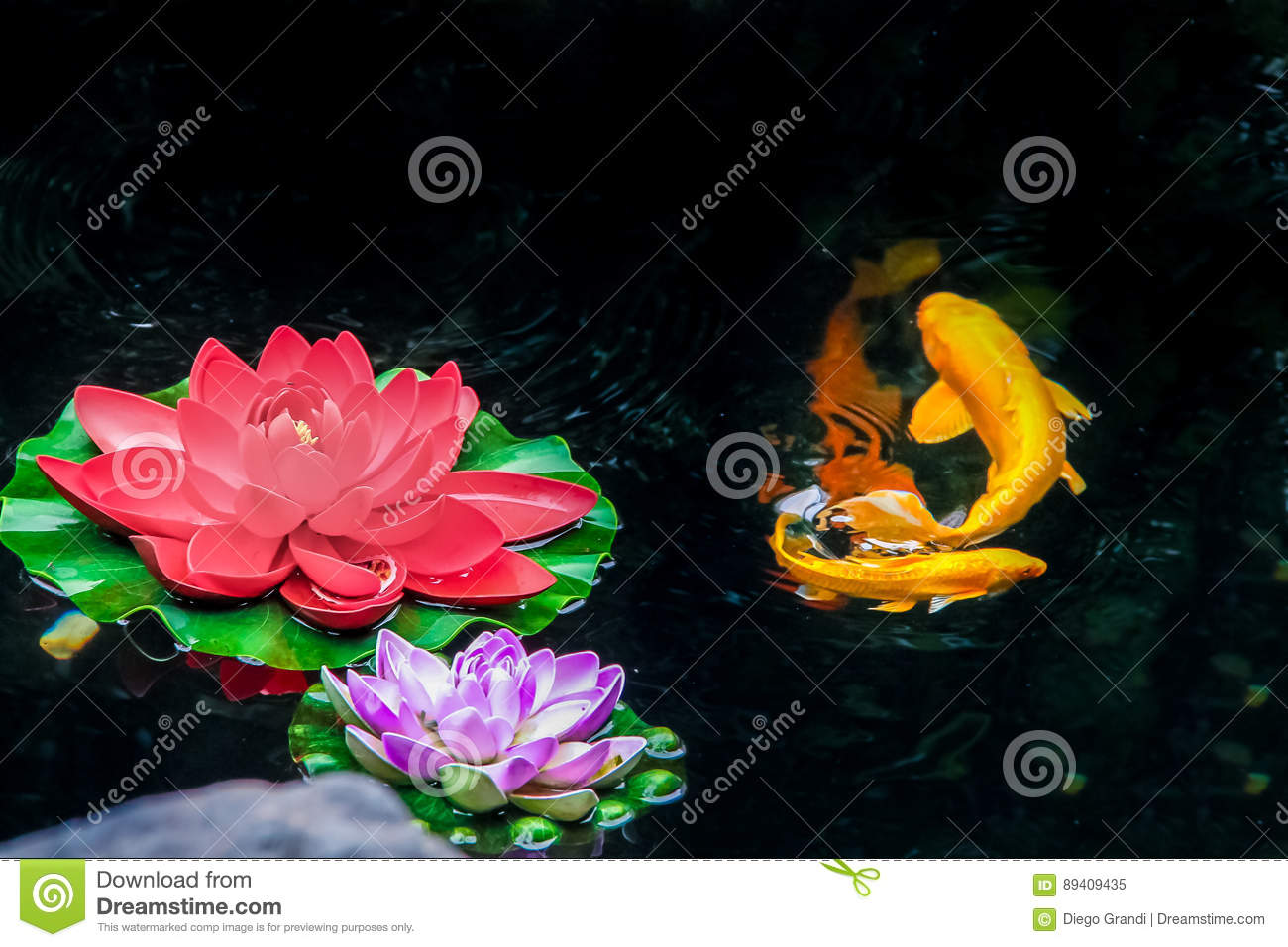 Koi fish and flowers on a pond - Shanghai, China