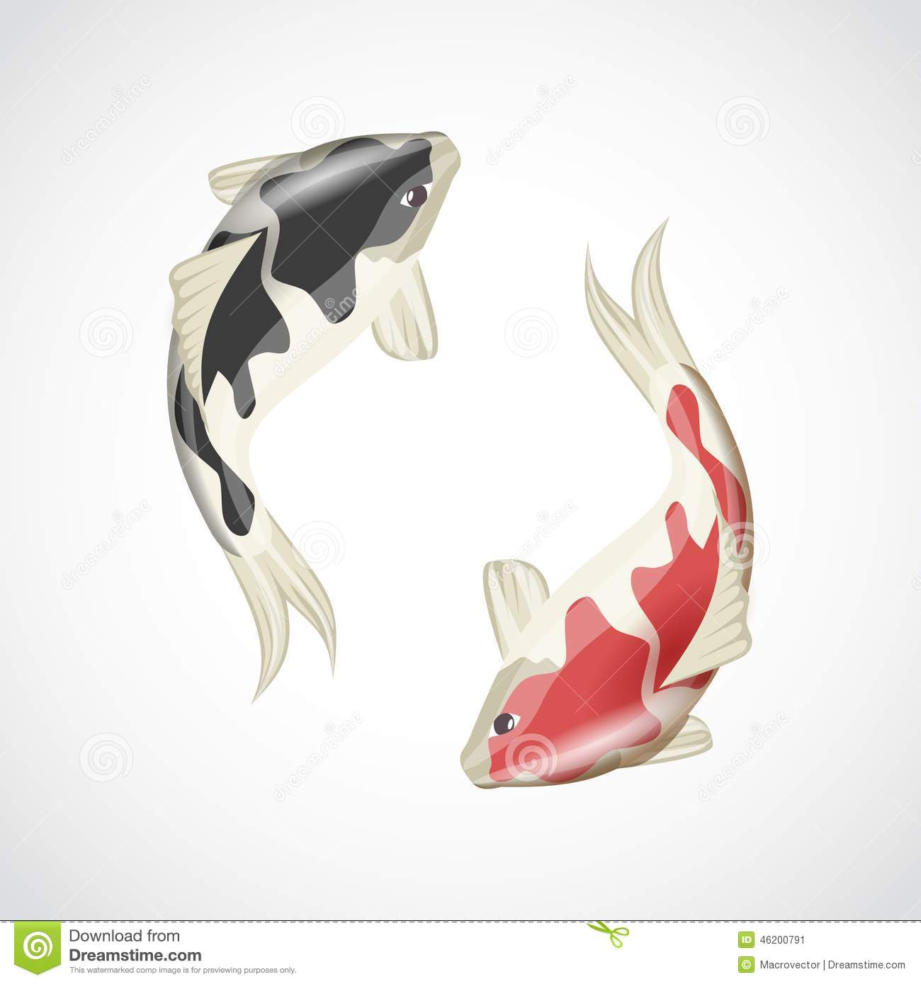 Chinese japanese koi fish red carp water animal isolated on white ...