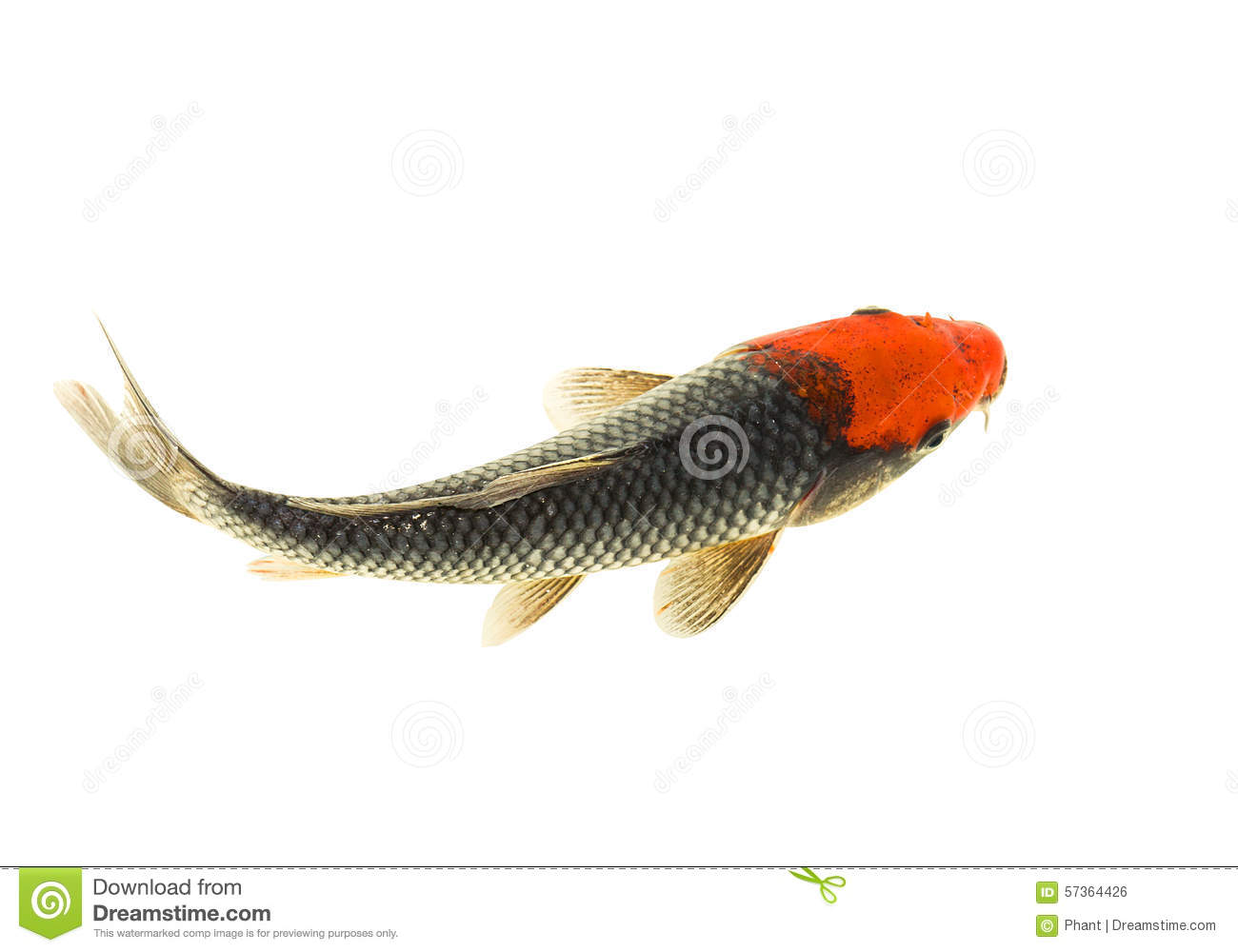 Koi Fish Stock Photo Image 57364426