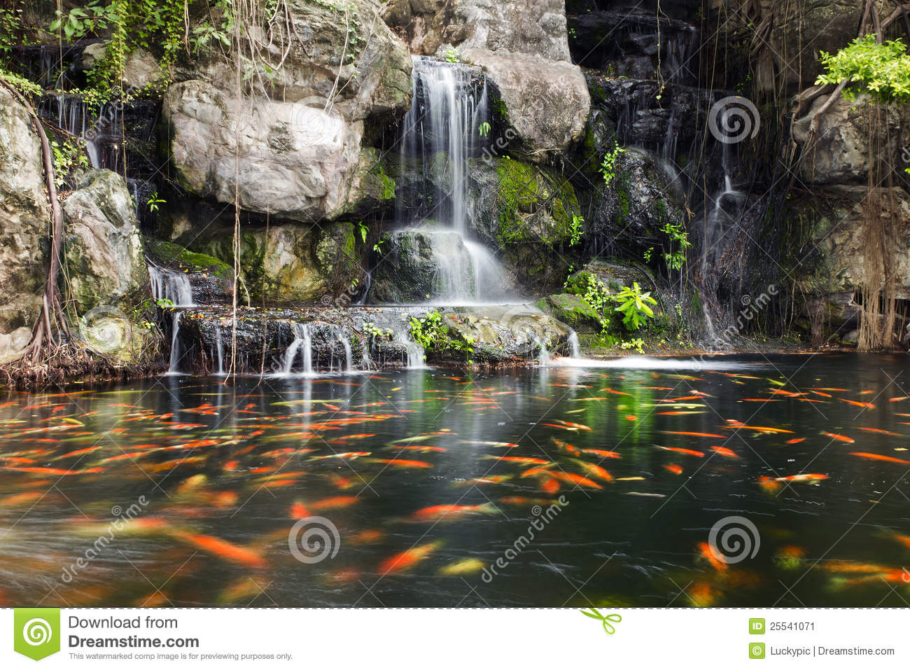 Koi fish in pond at garden with a waterfall stock image for Koi pool water gardens blackpool