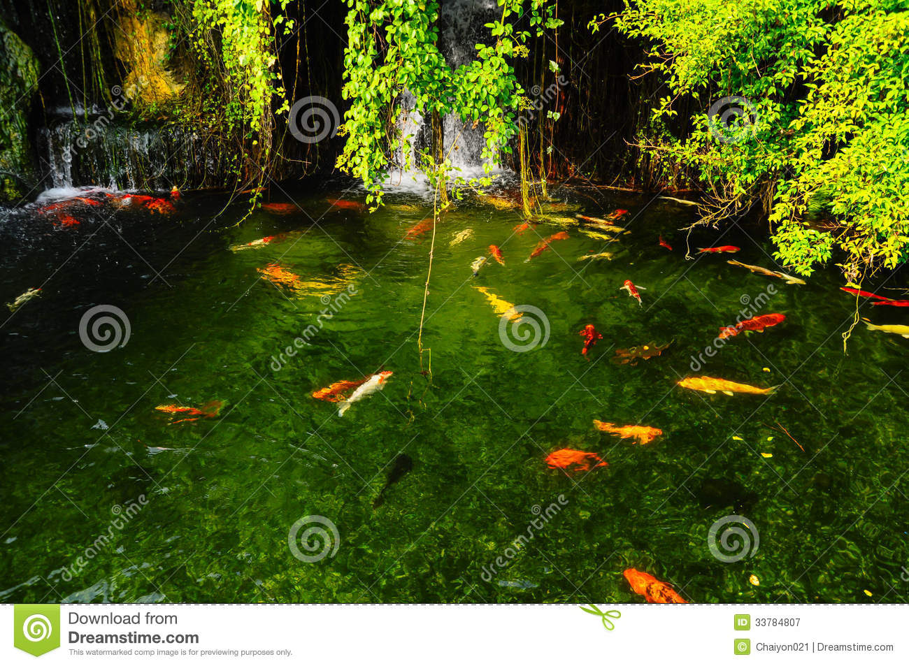 Koi fish in pond royalty free stock photography image for Garden pond design software free download