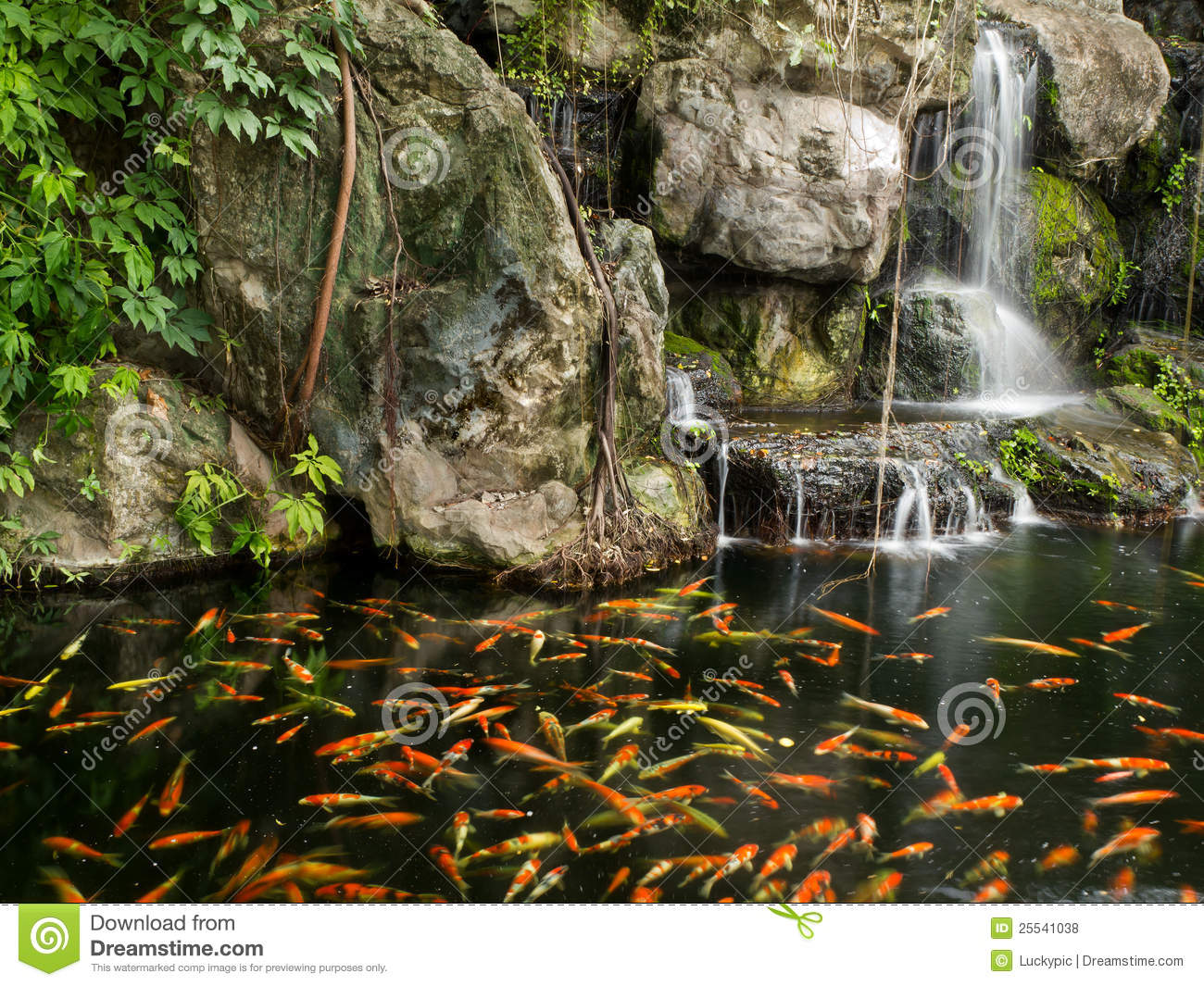 Koi fish in pond with a waterfall stock photo image of for Koi pond price