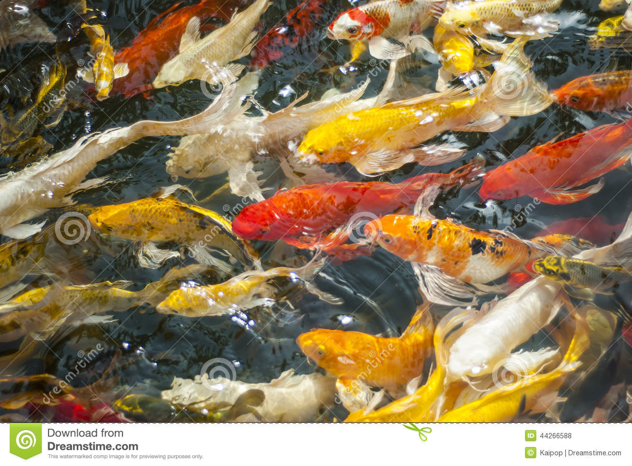 Koi fish stock photo image 44266588 for Surface fish ponds