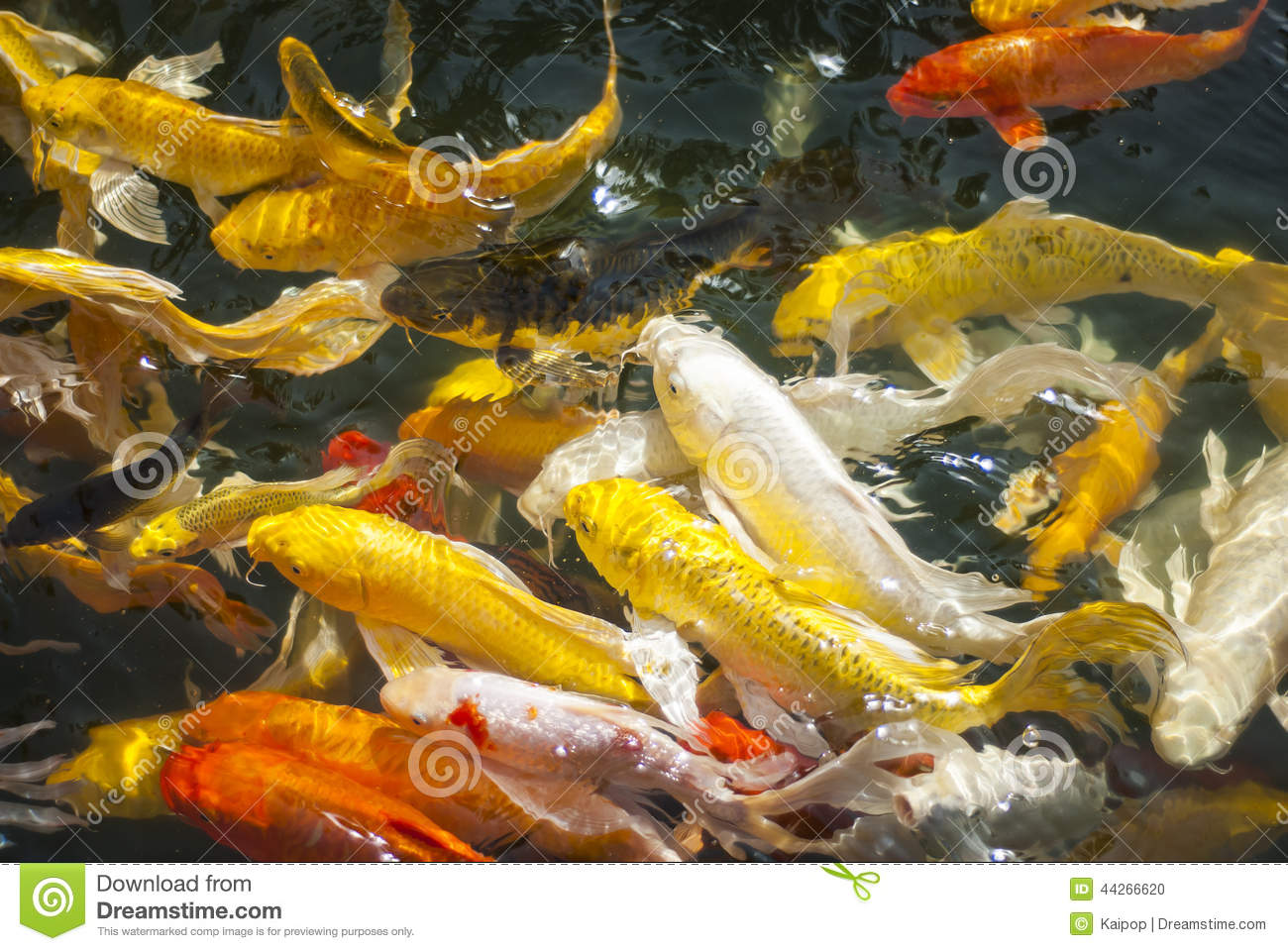 Koi fish stock photo image 44266620 for Surface fish ponds