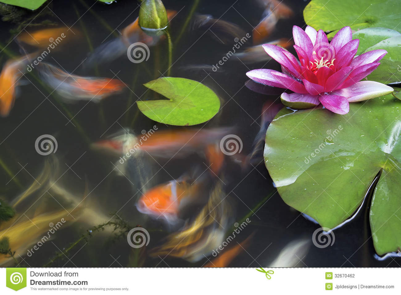 Koi fish swimming in pond with water lily stock photo for Koi fish water