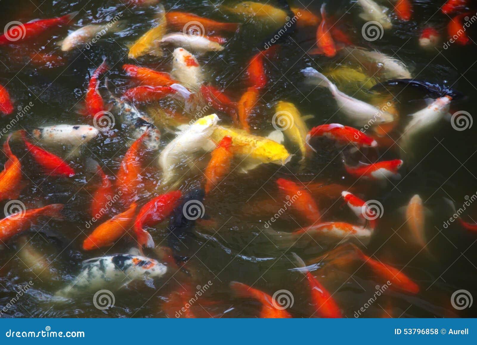Koi stock photo image 53796858 for Koi symbolism