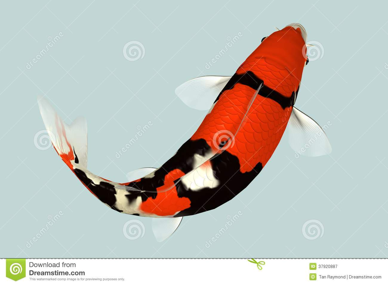 Koi Stock Photos - Royalty Free Stock Images