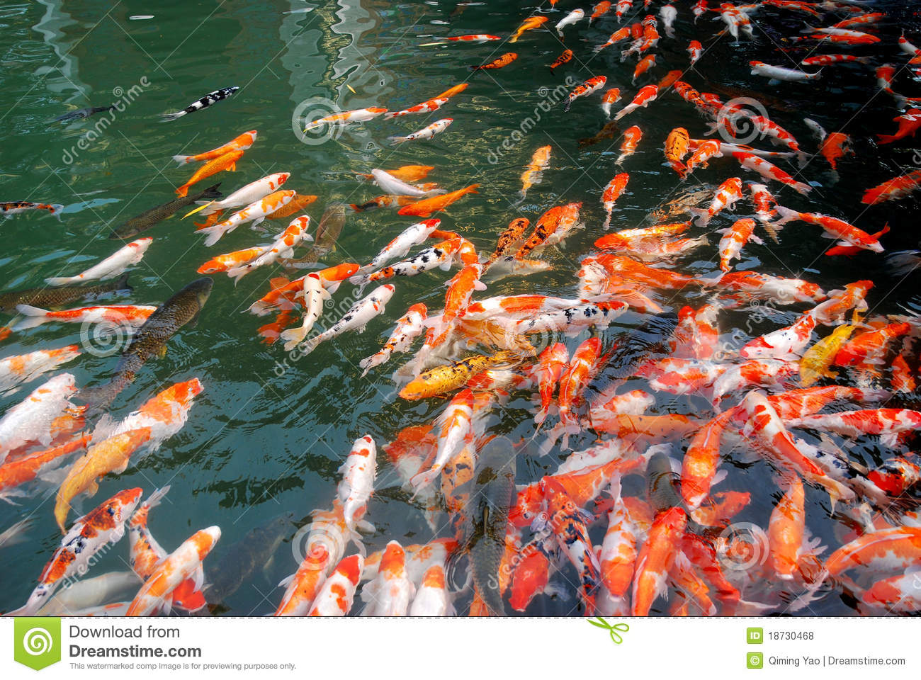 Koi in the lake royalty free stock photos image 18730468 for Larry king fish oil
