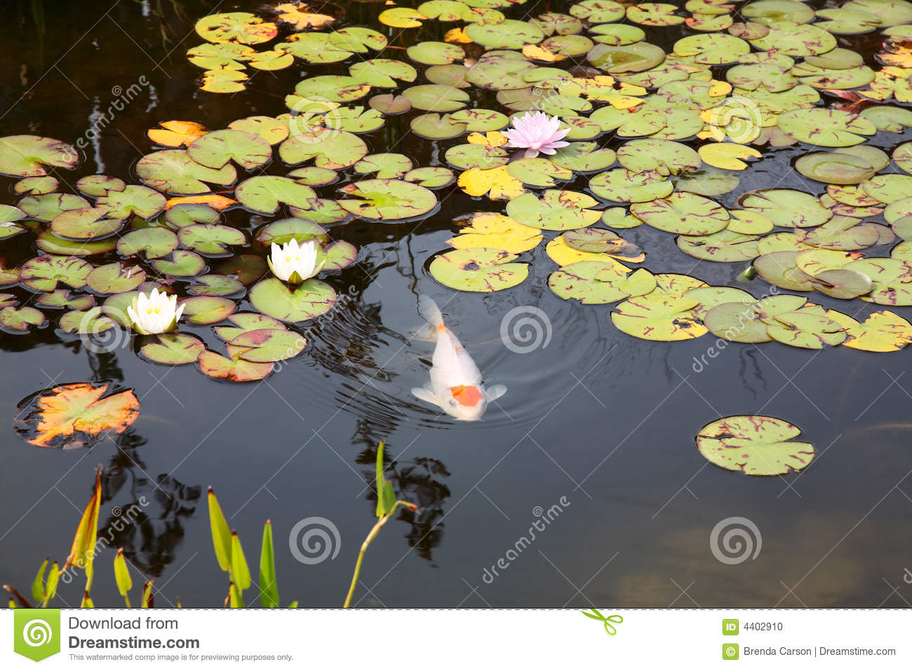 Koi pond stock photo image 4402910 for Surface fish ponds
