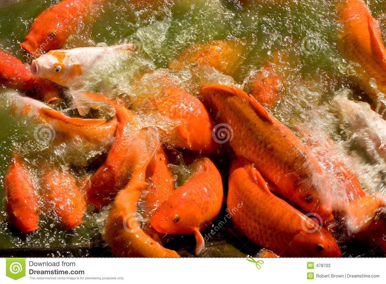 Koi pond stock photos image 478703 for Fish dream meaning pregnancy