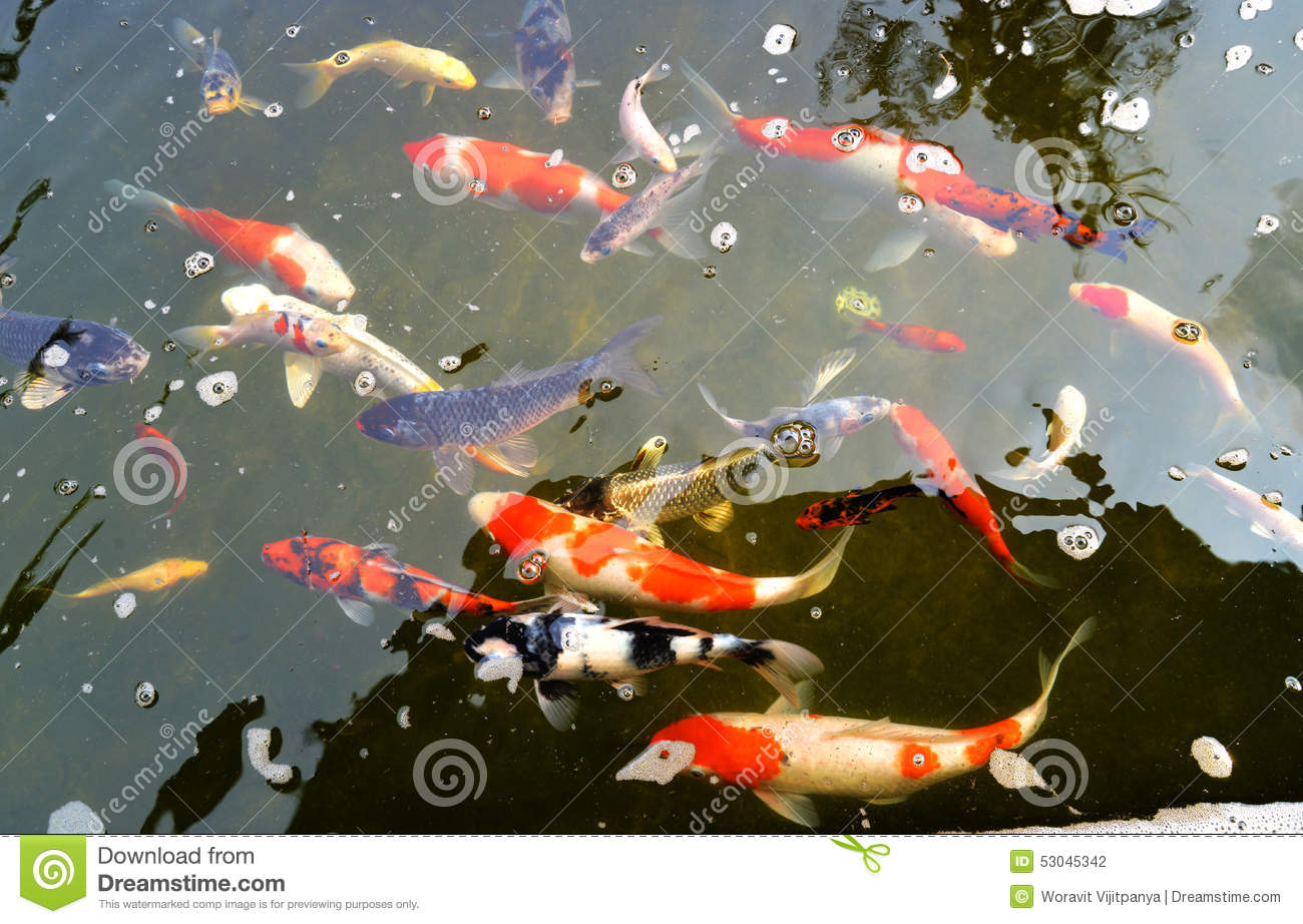 Koi pond stock photo image 53045342 for Koi pond price